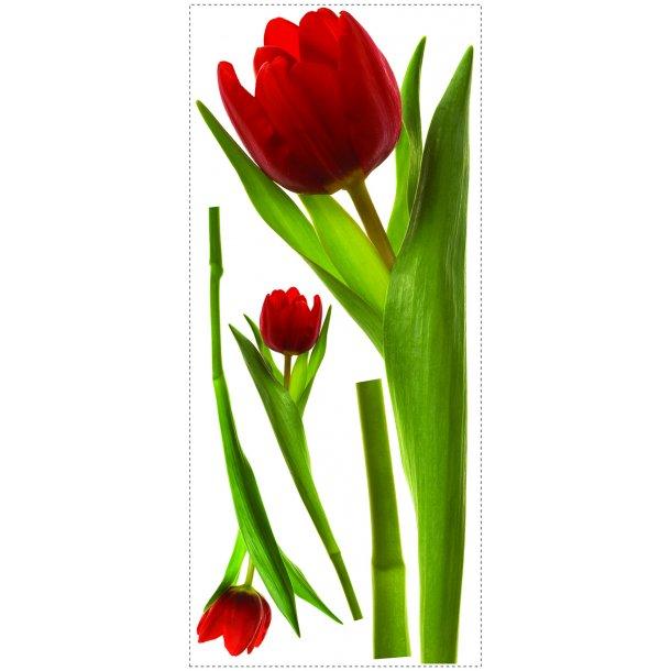 Wallstickers - røde tulipaner